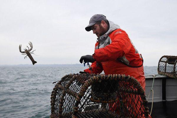 Un homard trop petit pour Julien Robin à la pêche au homard en baie de Paimpol (22)