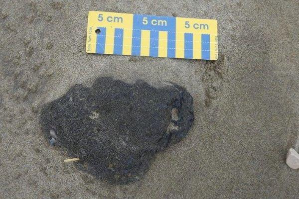 Plusieurs kilos de boulettes d'hydrocarbures ont été ramassés sur les plages de Camargue.