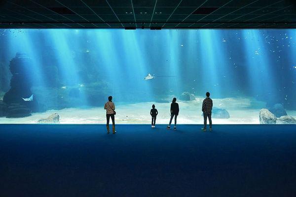 Image d'illustration du plus grand aquarium de Nausicaá.