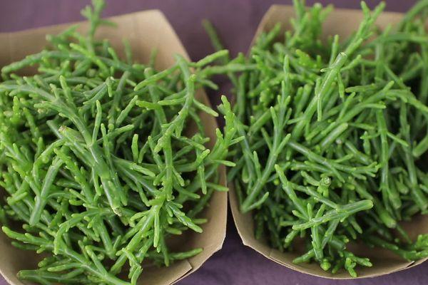 Les salicornes, encore appelées haricots de mer