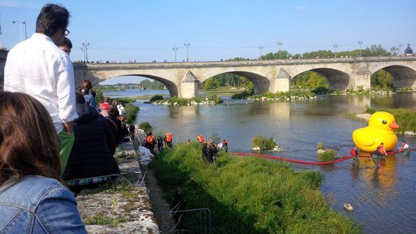 Duck Race à Orléans