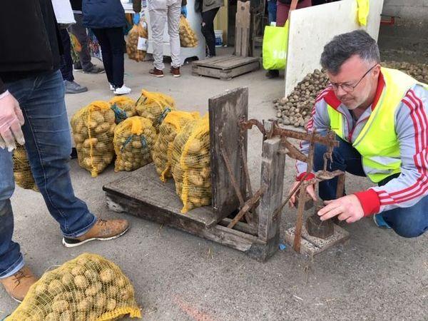 Un bénévole, en gilet jaune, pèse les pommes de terres récupérées par les clients.