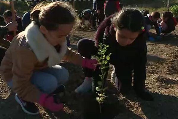 Les enfants ont bravé le froid pour planter des arbres sur les lieux de l'incendie de 2016 à Ensues-la-Redonne.