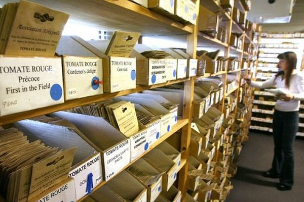 Les étagères de Kokopelli recèlent des semences reproductibles exclues des catalogues