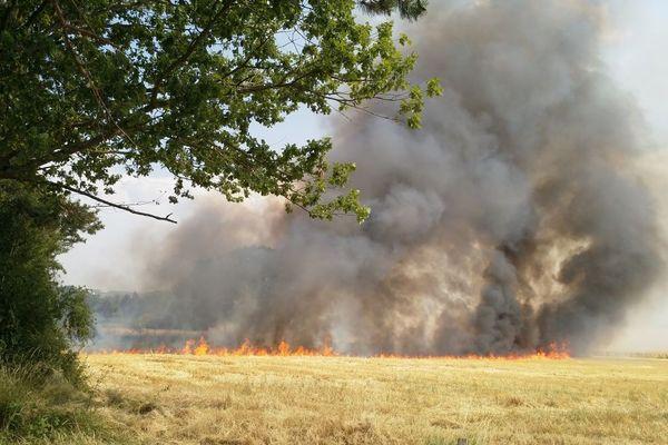 Avec la canicule, la nature est si desséchée que les flammes se propagent très rapidement.