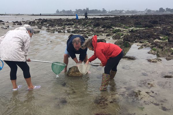 Pêche à pied sur l'Ile-Tudy, septembre 2019