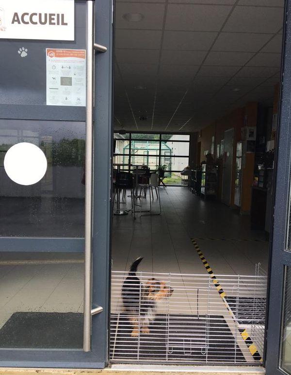 Au refuge de Tollevast (50), César, chien abandonné, attend une nouvelle famille dans un hall vide : l'accès au refuge n'est plus libre depuis la crise sanitaire, les adoptions se font uniquement sur rendez-vous les après-midis.