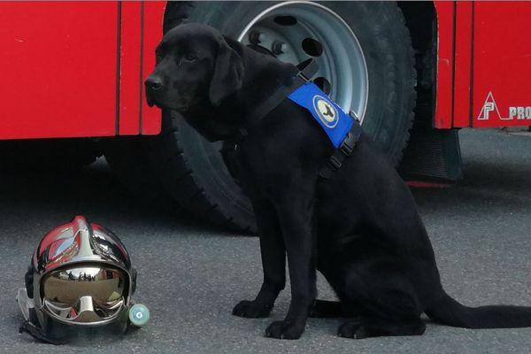 LOL sera mis à la disposition de la justice de Cahors par l'association Handi'chiens, le 14 mars prochain