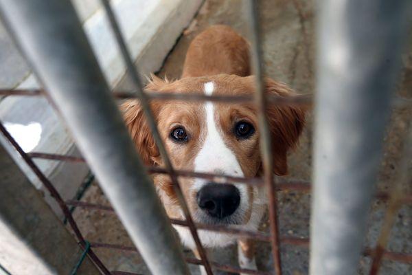 """Chaque année, """"100 000 animaux sont abandonnés"""", selon les associations."""