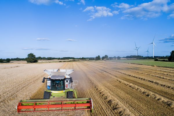 Les moissons (ici, du blé) sont en net recul cette année en Centre-Val de Loire. Photo d'illustration