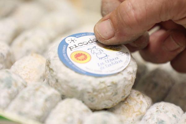 Ardèche : on vous explique comment reconnaître un vrai Picodon