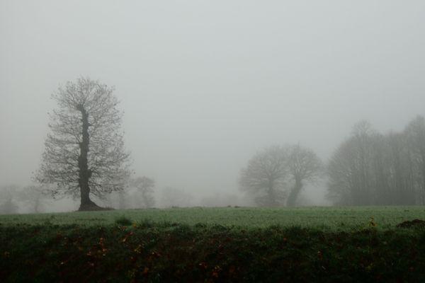Un petit matin brumeux