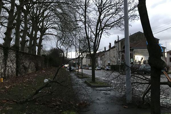 Un arbre cassé par les bourrasques à Nancy.