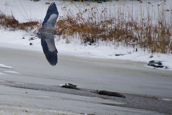 Corsica River dans  le  Maryland, USA, le 13 février 2014