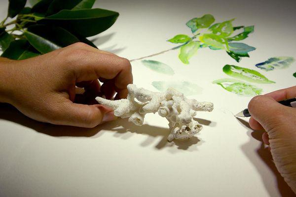 Le corail blanchi, un phénomène largement observé par l'expédition Tara