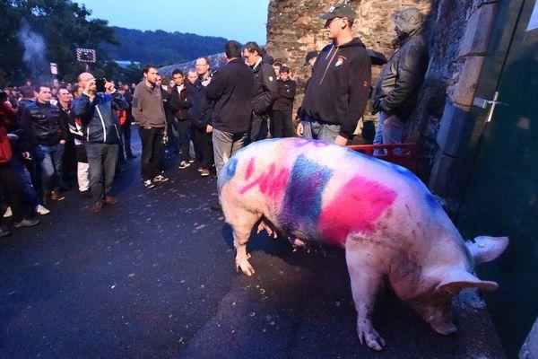 A Morlaix, une centaine de producteurs de porcs ont lâché devant la sous-préfecture, une truie baptisée « La Folle », en référence au ministre de l'Agriculture