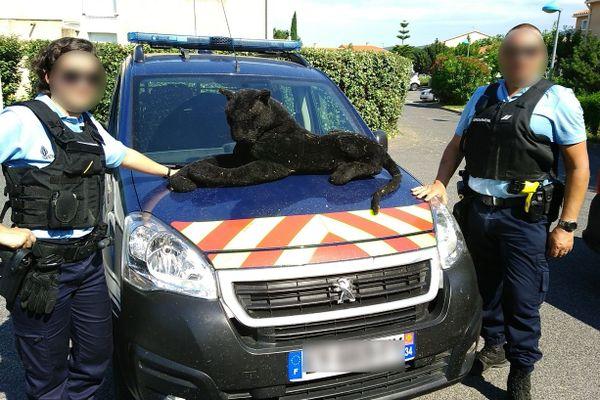 Les gendarmes appelés pour la divagation d'une panthère noire tombent nez à nez avec une peluche