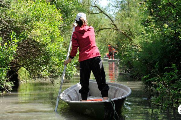 """Les barques à fond plat qu'on appelle """"nego-chien"""" dans les marais de Camargue"""