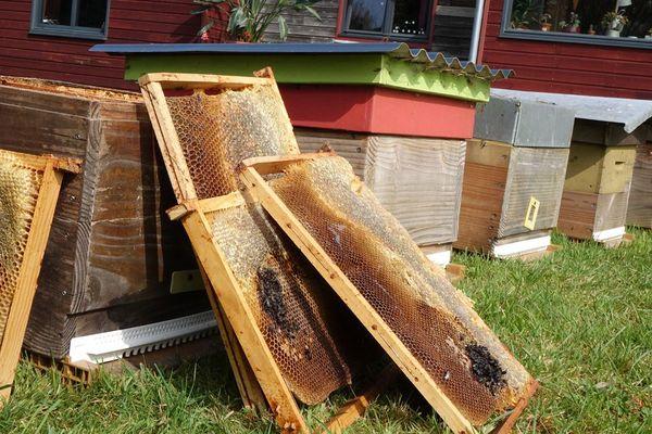Les abeilles de Sven, touchées par une forte mortalité