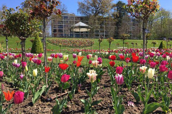 Jardin des plantes du Mans. C'est la saison des tulipes !