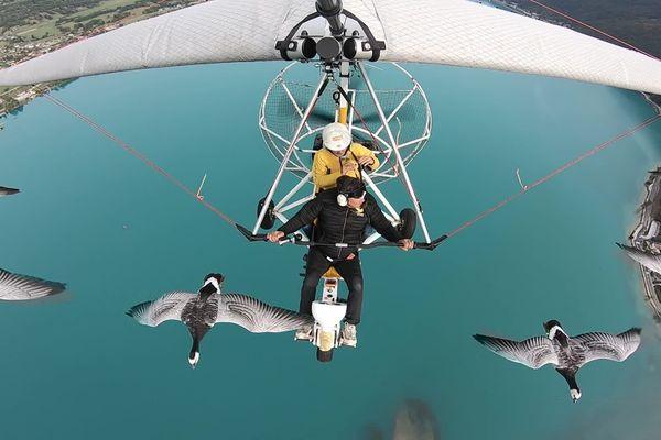 Dominique Cruciani vole avec ses oies au dessus du lac d'Annecy.