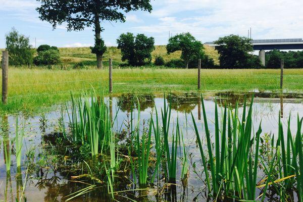 Voici le genre de zones humides qui vont être créées aux abords de la LGV. Ici Argentré en Mayenne.