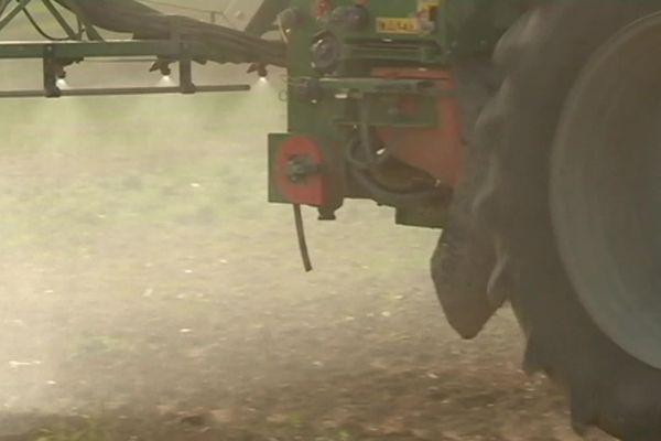 Pour l'instant, en Charente Maritime, l'agriculture conventionnelle peine à se passer du glyphosate, herbicide bientôt interdit