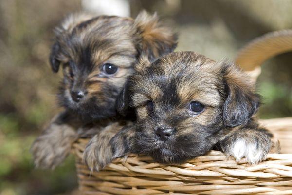 Chaque année, 100 000 chiens et chats sont abandonnés en France.