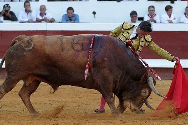 Les cornes en bas, un gabarit de wagon, la muleta templée de Diego Urdiales au 5ème toro. Un des moments pour la mémoire de cette corrida de Dax.