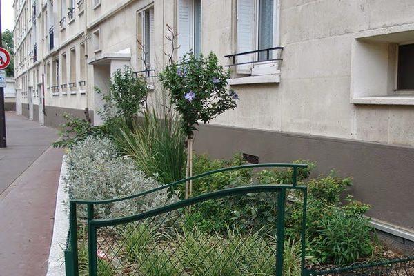 Plantations en pleine terre en pied d'immeuble, rue Louis Delaporte Paris 20e