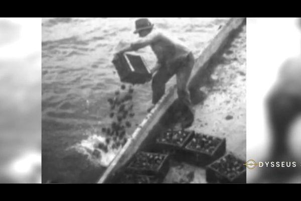 Des tonnes de munitions auraient été immergées dans le lac Léman par des entreprises privées.