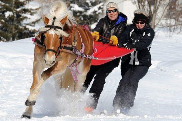 Le ski-joëring : une autre façon d'aborder la montagne