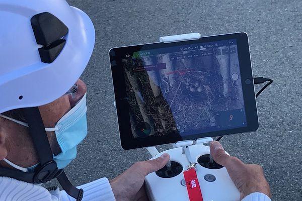 Des drones utilisés pour stériliser les œufs de goélands.