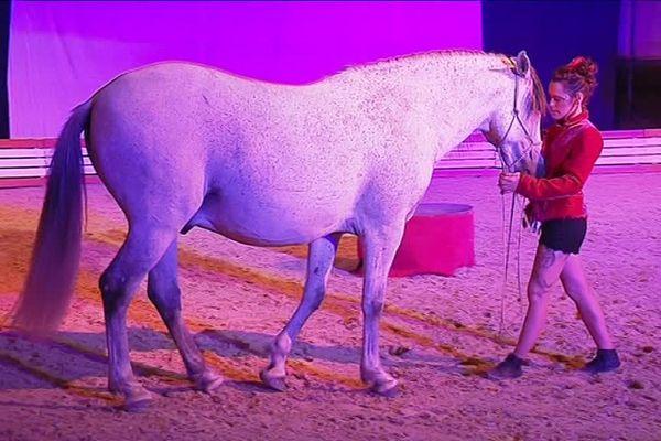 Amandine Tirebois murmure à l'oreille des chevaux et les dresse à la perfection.