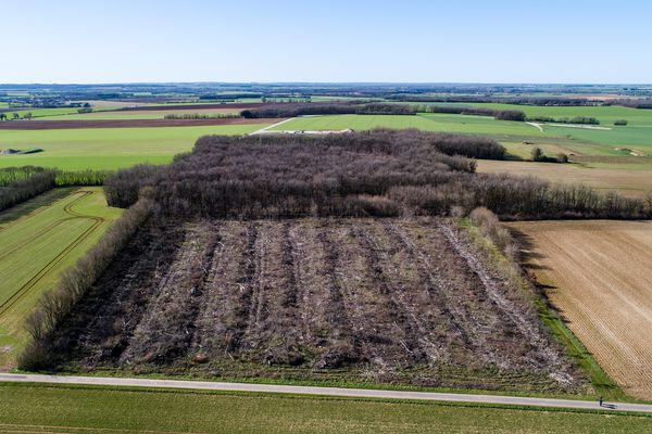 Tout reste à faire sur cette ancienne forêt de la Plaine d'Argenson.
