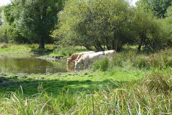 Préservation du Marais de Morlin, un des derniers marais du Rhône à Taluyers
