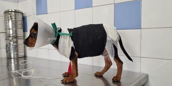 Iboo reçoit des soins tous les jour pour soigner ses brûlures.