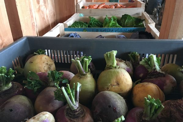 Dans la Vienne, les fruits et légumes représentent, en 2017, 18,1% de la part de la surface agricole utilisée engagée en bio.