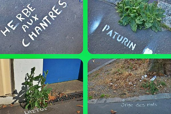 Des plantes sauvages à l'assaut de nos villes.