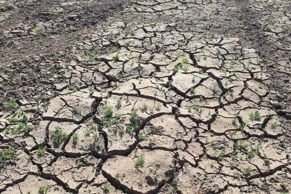 En 2019, le Puy-de-Dôme avait été touché par la sécheresse. La reconnaissance de l'état de catastrophe naturelle pour mouvements de train sur 84 communes vient d'être publié dans le Journal Officiel du 12 juin.