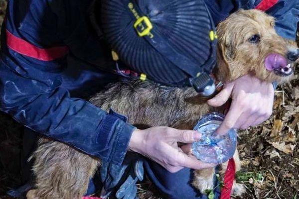 Il aura fallu quasiment une semaine pour les secouristes afin de sortir Java d'une cavité de 4 à 5 mètres de profondeur.
