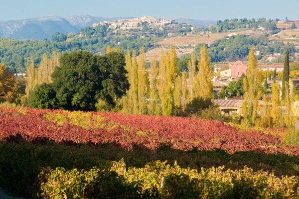 Les vignobles de Bandol se visitent (aussi) en automne.