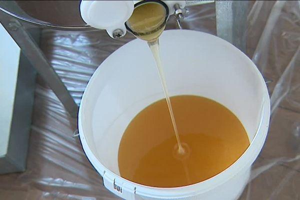 Après deux mois et demi, le miel a pu être récolté !
