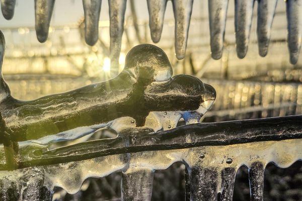 Les bourgeons de la vigne recouverts d'eau gelée à Celles-sur-Ource.