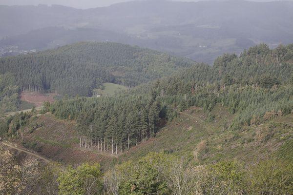 La forêt de la Pyramide (Rhône) et sa parcelle de 5,3 hectares qui va être repeuplée avec de nouvelles essences plus adaptées au changement climatique.
