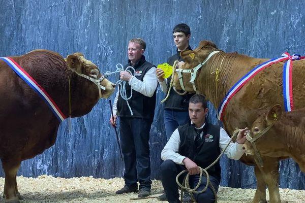 Jersey du Gaec Pimpin et Jouvence de l'élevage de Philippe Deshoulières sacrés au salon de l'agriculture