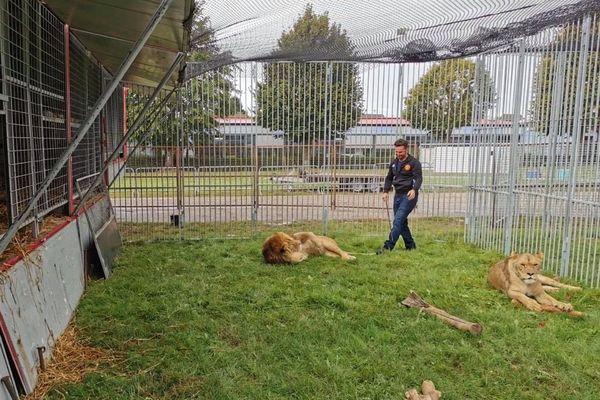 Le cirque Seneca basé en ce moment à Yvetot s'oppose vivement à l'interdiction progressive des animaux sauvages dans les spectacles.