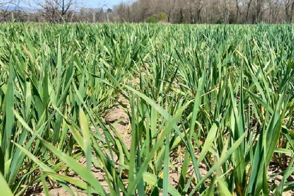 En Auvergne, la sécheresse de l'hiver et la douceur du printemps inquiètent les agriculteurs, qui craignent une nouvelle année de sécheresse.