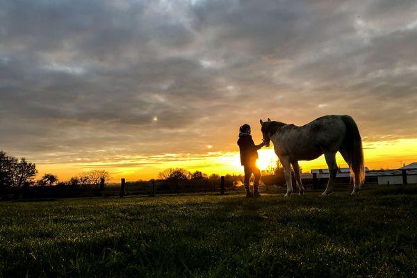 Inquiétude chez les éleveurs de chevaux après des survol de drone en Midi-Pyrénées.