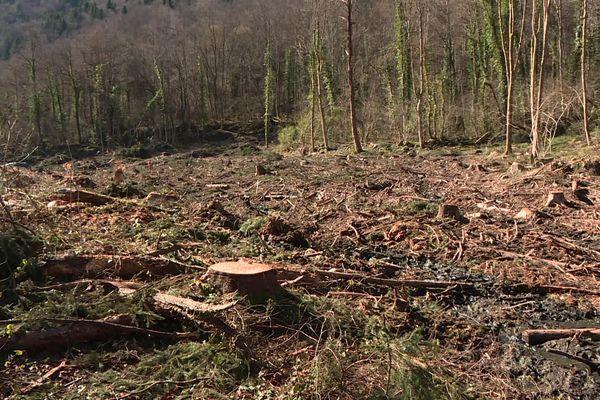 """Exit la forêt de chênes centenaires sur la commune de Perles-et-Castelet en Ariège. Elle n'est plus que souvenir pour les propriétaires des parcelles boisées qui ont été """"exploitées"""" sans autorisation par des bûcherons espagnols."""